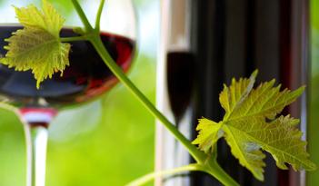 Tagung & Weinverkostung in Braunschweig